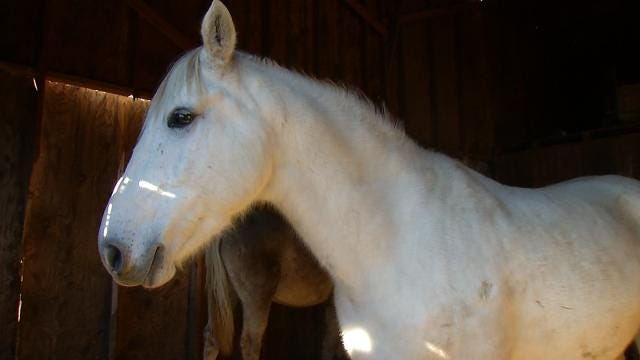 Owner Of Rescued Mare, Colt Found In Creek County Identified