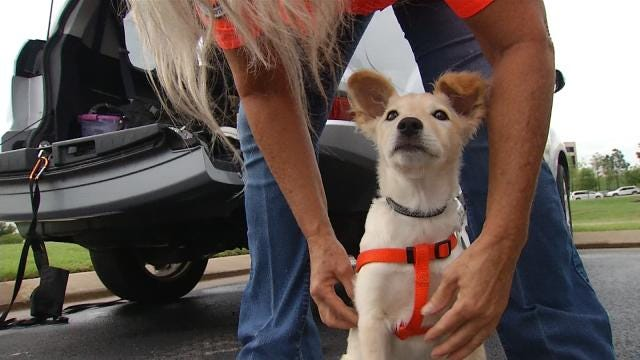 Stray Dog From Jenks Now In Training To Save Lives