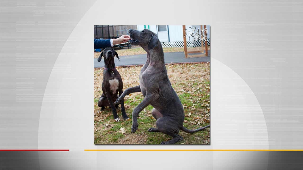Pryor Couple Pleads Guilty To Neglecting Dogs, Is Given Deferred Sentence