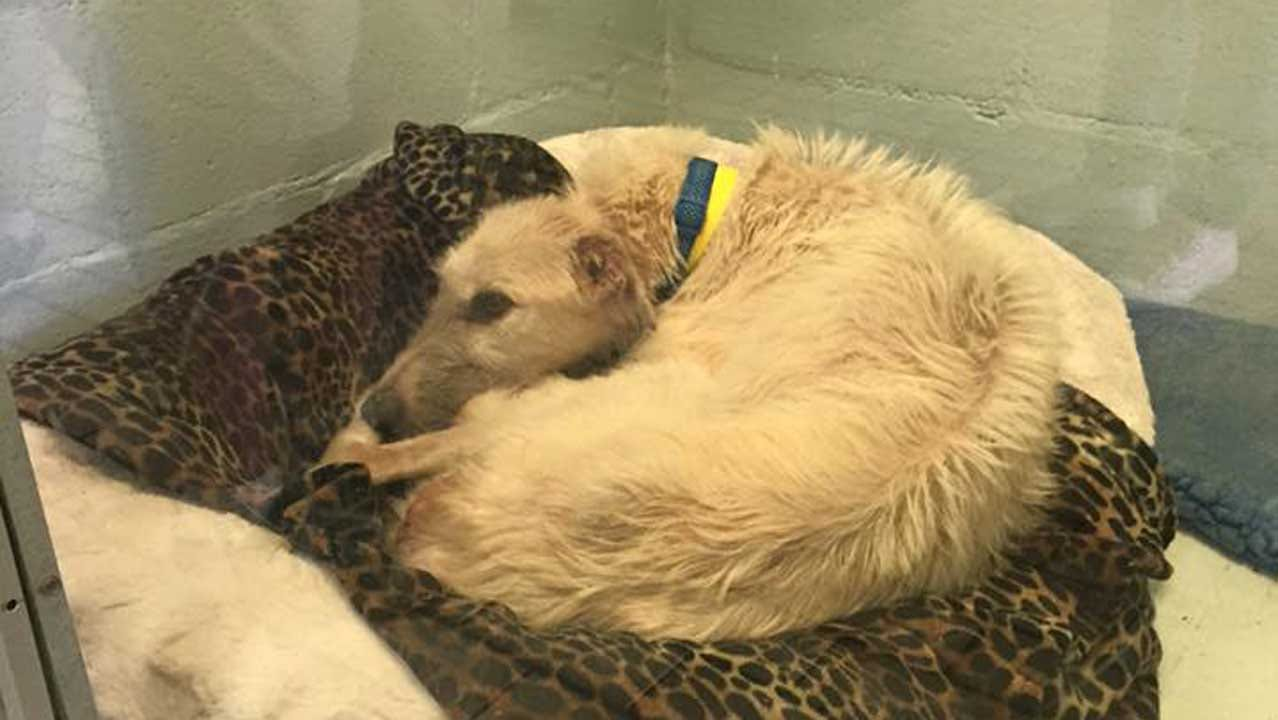 Tulsa Humane Society Seeks Donations After Animal Cruelty Rescue