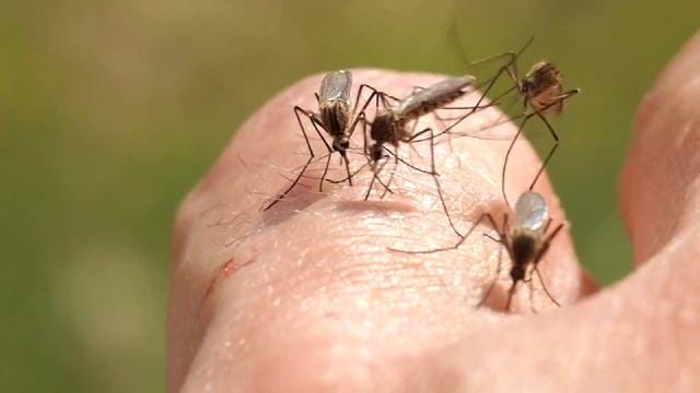 Muskogee County Using New Tool To Fight Mosquito Problem