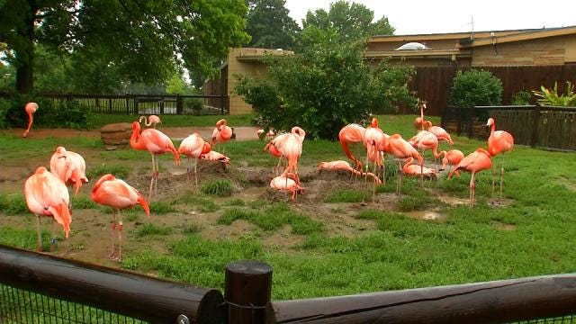 Flooding Concerns Close Mohawk Park And Tulsa Zoo