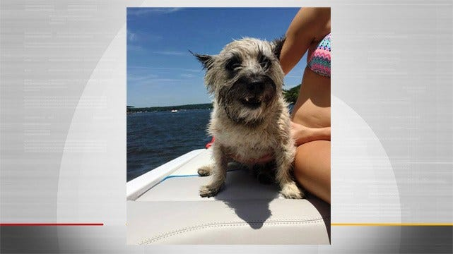 Chelsea Teen Rescues Dog Stranded In Middle Of Grand Lake