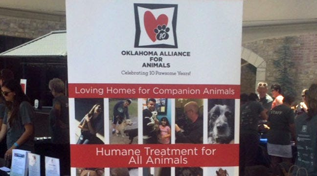 Jenks Rock And Rescue Event Connects Pets With New Homes