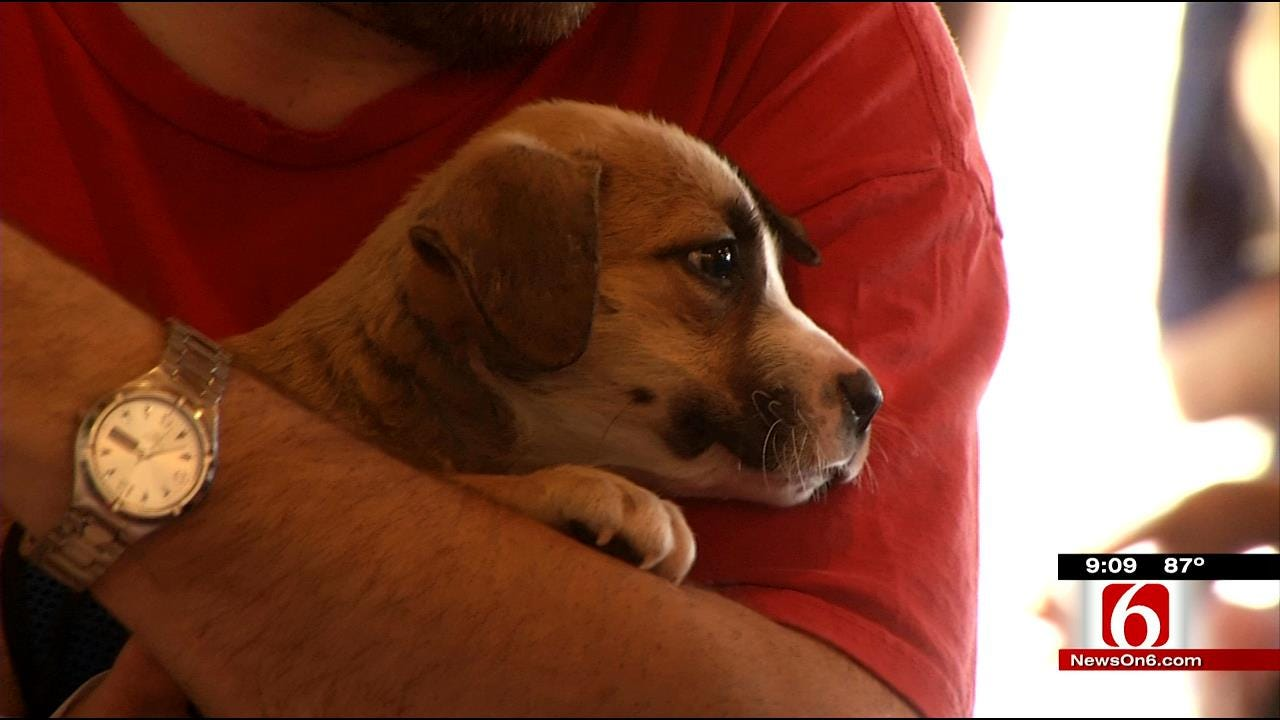 Free Pet Services At Tulsa Humane Society Event Sunday