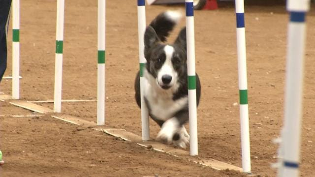 Tulsa Agility Dog Trials Held This Weekend At The Fairgrounds