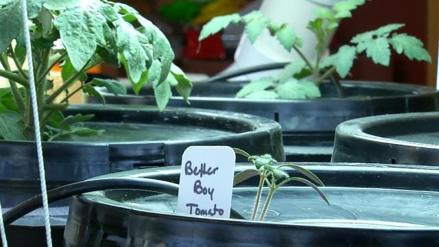 Tulsa Business Teaching Local Gardeners The Science Of Hydroponics