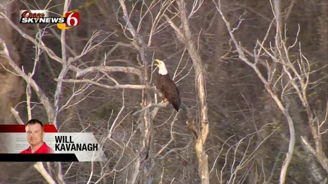 Sand Springs Tornado Destroys Bald Eagle Nests, Chicks