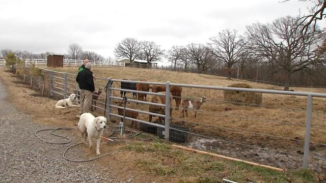 Wagoner County Farm A Positive Alternative For Foster Children