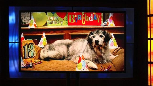 Willie The Ponca City Dog Turns 18