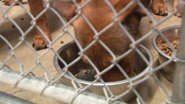 Idabel Animal Shelter Floods; Dogs Get Temporary Tulsa Home
