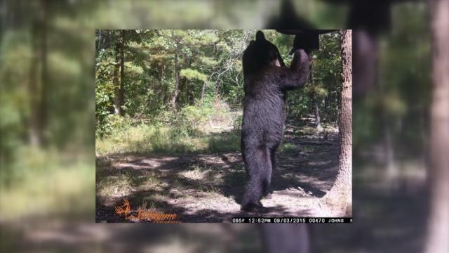 Growing Bear Population Causes Trouble For NE Oklahoma Deer Hunters