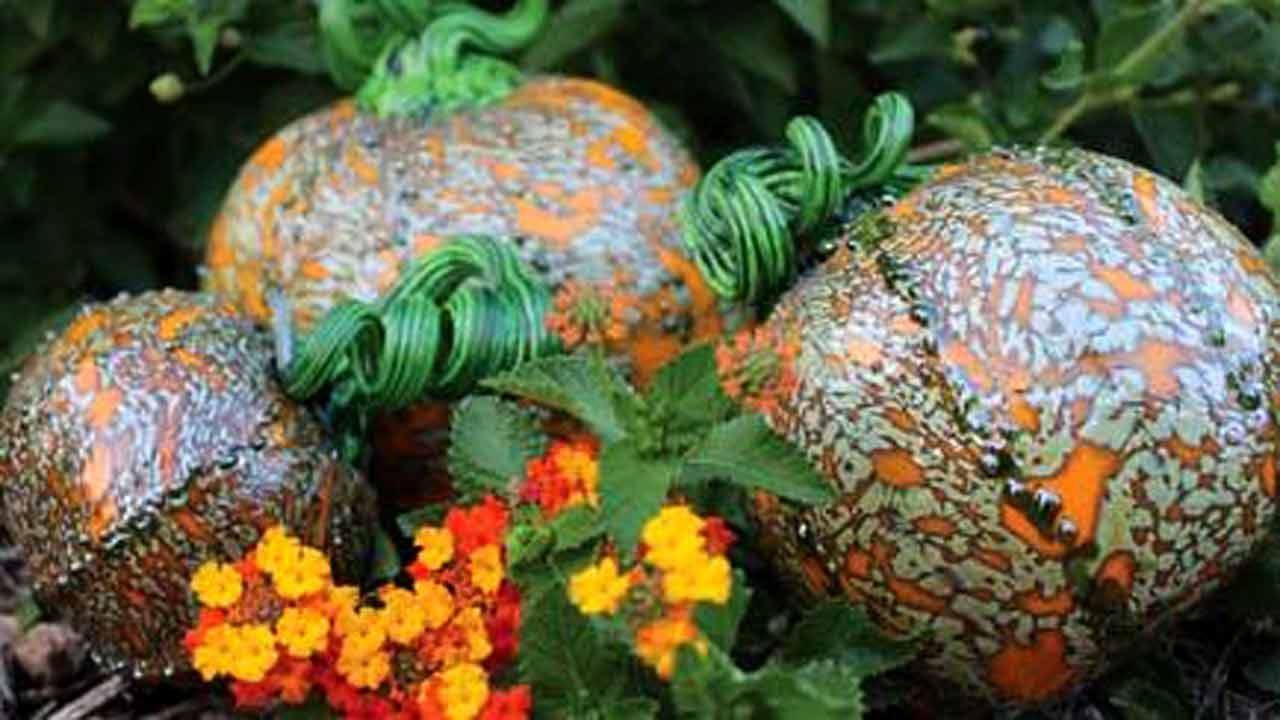 Fall Events Scheduled At Tulsa Botanic Garden
