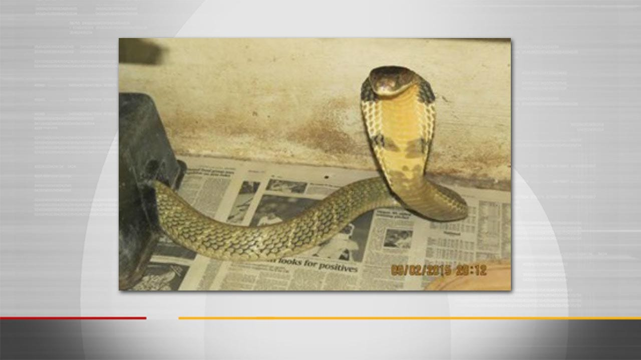 King Cobra Missing For Weeks In Florida Found Under Dryer