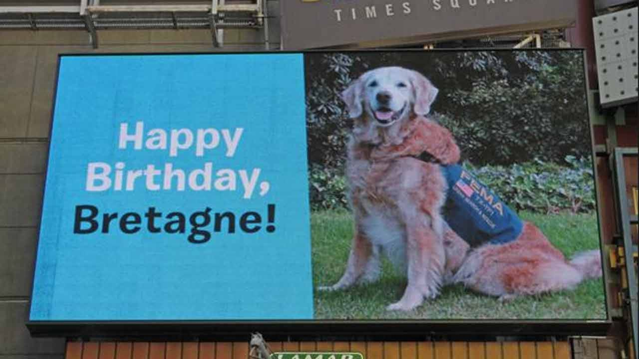 Only Surviving 9/11 Rescue Dog Celebrated In NYC