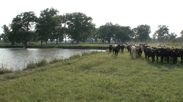 Oklahoma Ranchers Affected By New Federal Clean Water Act Rules