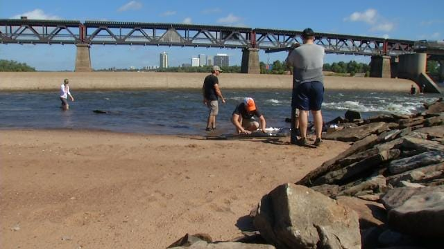 Biologists Study Ancient Fish Stacked In Metro Stretch Of Arkansas River