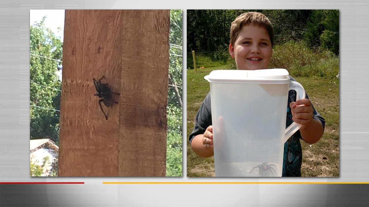 Scared Of Spiders, Sapulpa Woman Turns To Facebook