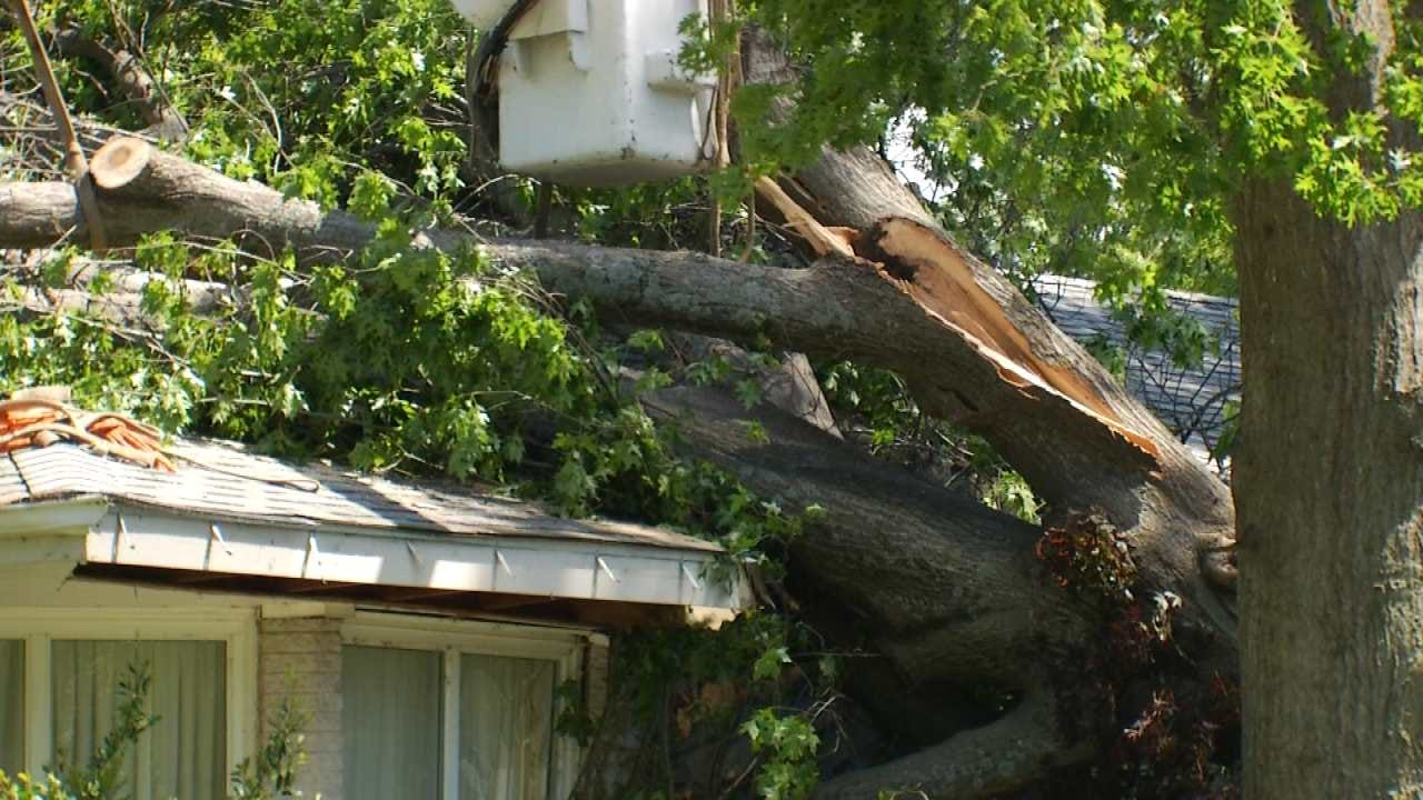 Expert Says It's Best To Consult Pros When Tree Storm Damage Occurs