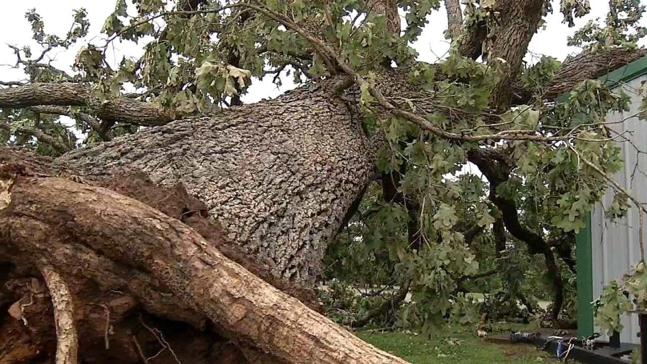 Greenleaf State Park Sustains Major Tree Damage In EF1 Tornado