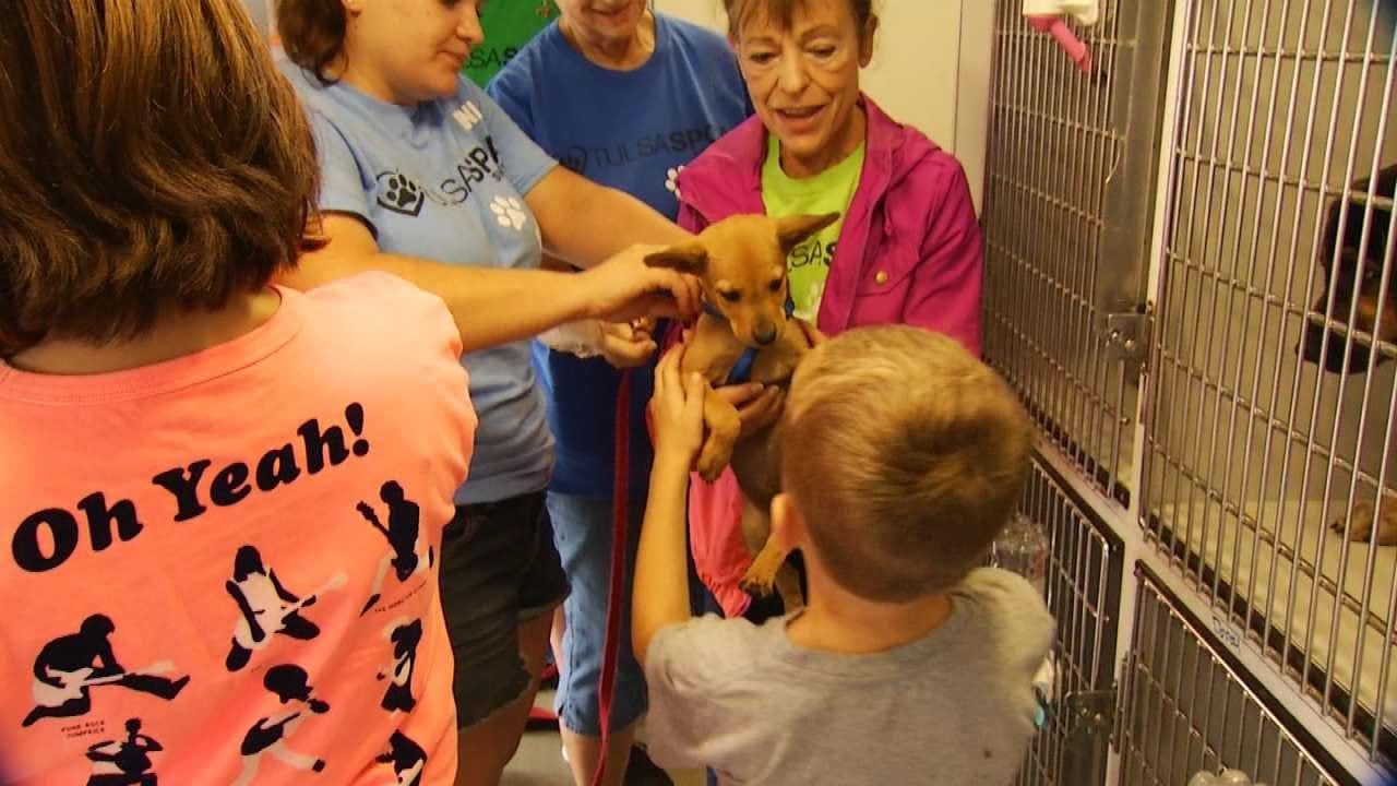 Tulsa SPCA Rescues Displaced Animals Following Louisiana Flooding