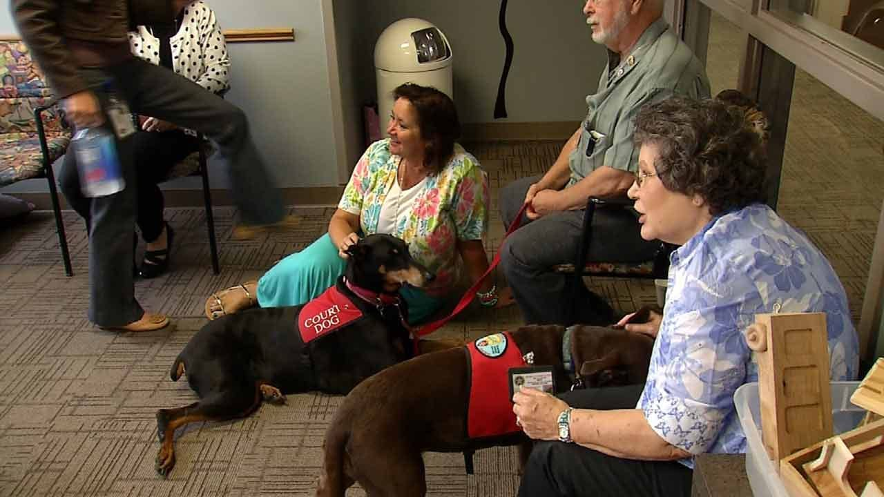 Therapy Dogs Help Children Cope With Courtroom Trauma