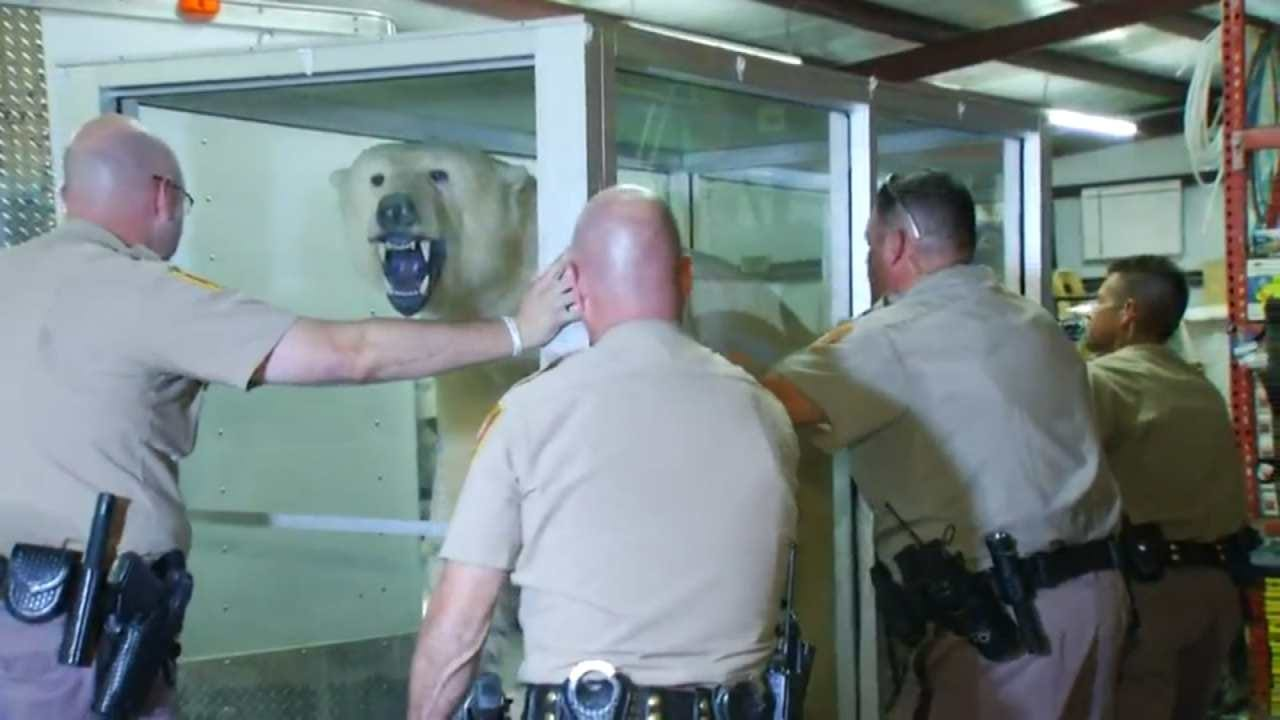 Game Wardens Confiscate Stuffed Polar Bear At Jones Airport