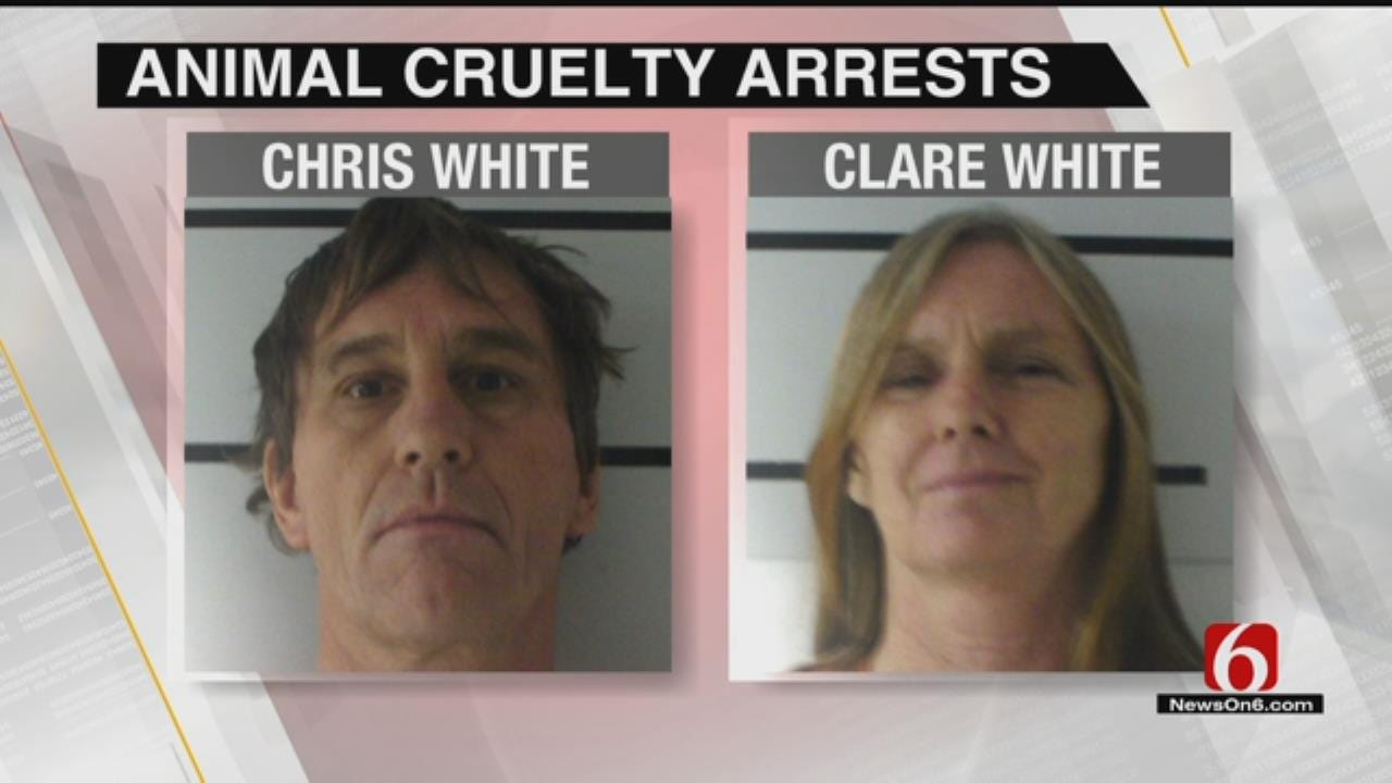 Delaware County Sheriff Says Couple Had Hundreds Of Neglected Animals