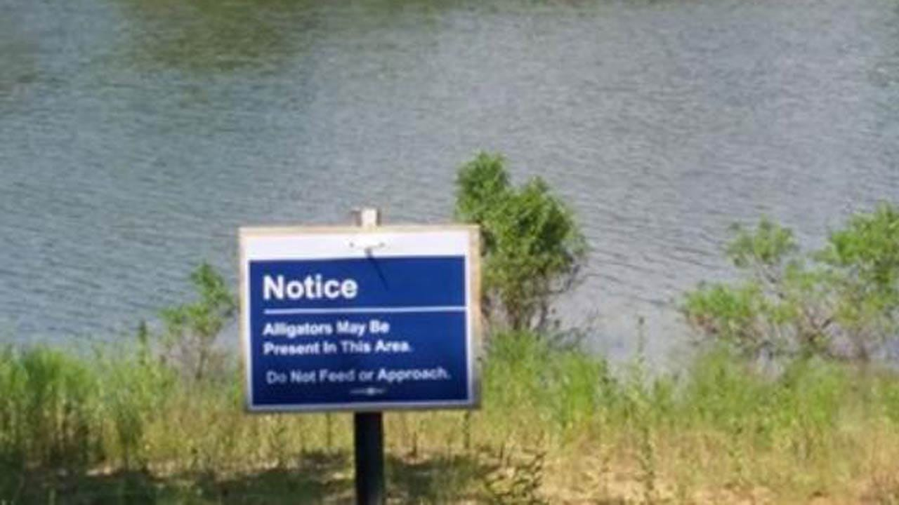 Alligators At Lake Texoma Have Visitors Concerned