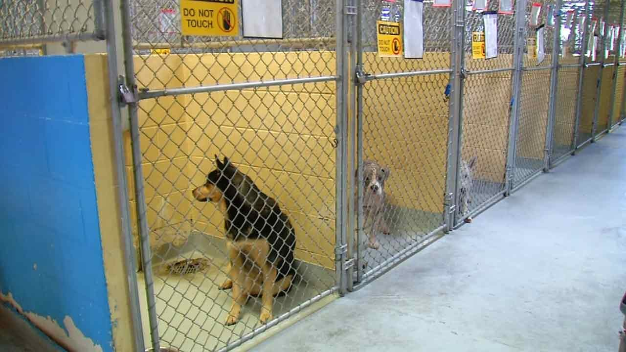 Tulsa Animal Welfare Hopes To 'Clear The Shelter' This Weekend