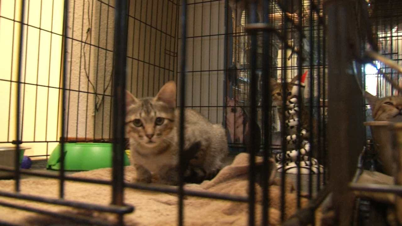Animal Shelter Event Highlights Need For Pet Adoptions In Tulsa