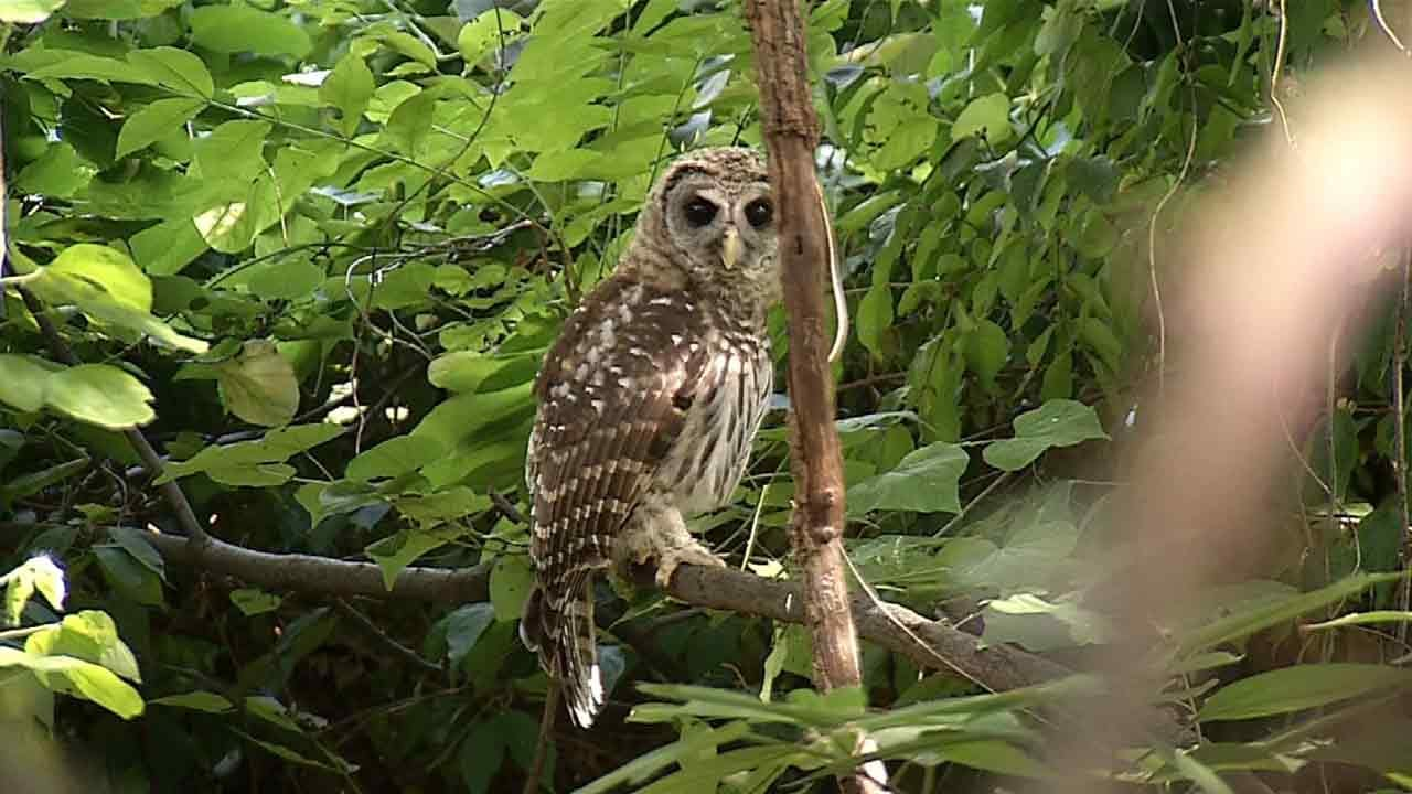 Tulsa Church Drops Parking Lot Expansion Opposed By Owl Advocates