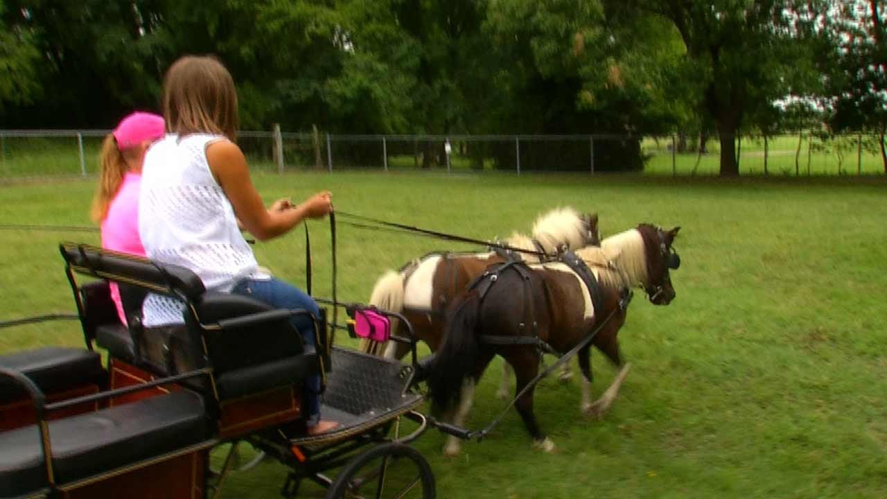 Oklahomans Hold 15th Annual Horse Driving Clinic