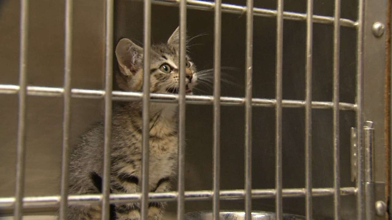 Campaign To Educate Community Could Save Thousands Of Tulsa Animals