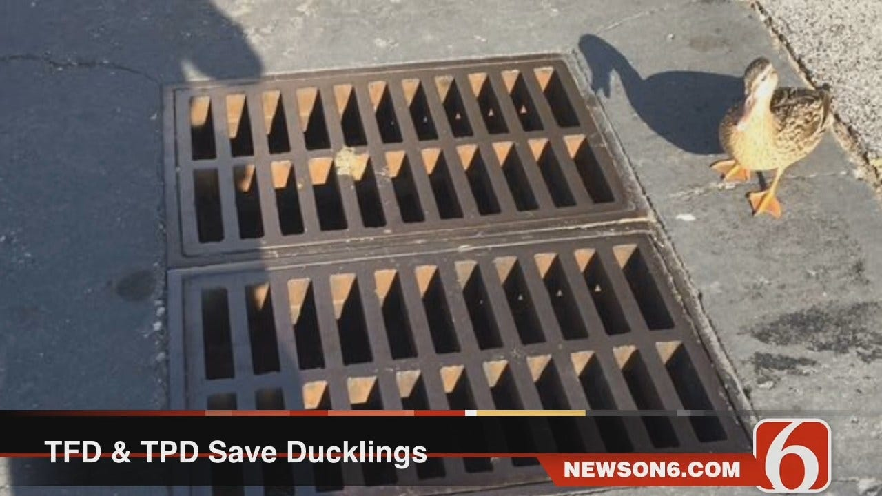 Trapped Ducklings Freed By Tulsa Police And Firefighters