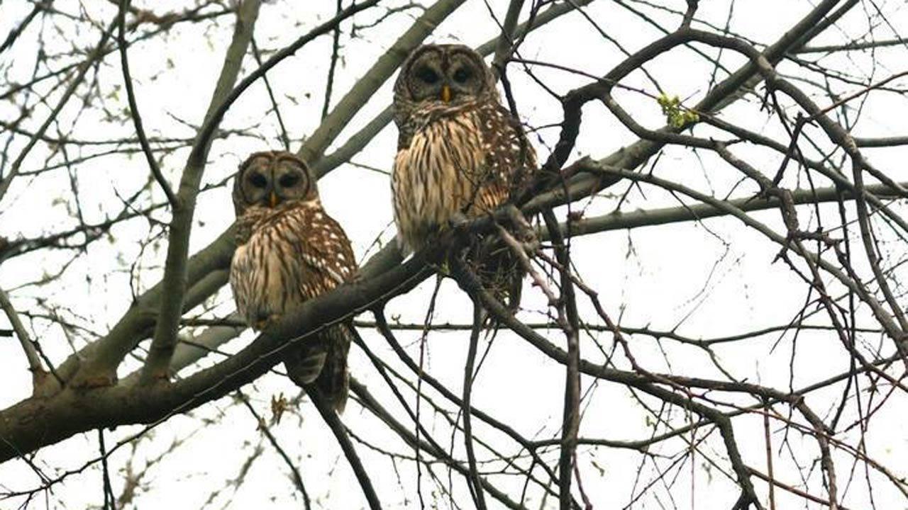 'Low Flying Owls' Signs Installed In Tulsa Neighborhood