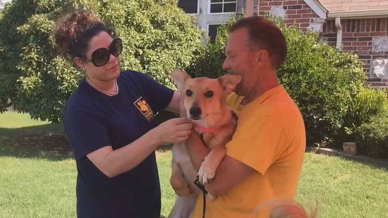 Tulsa Humane Society Rescues Another 70 Dogs