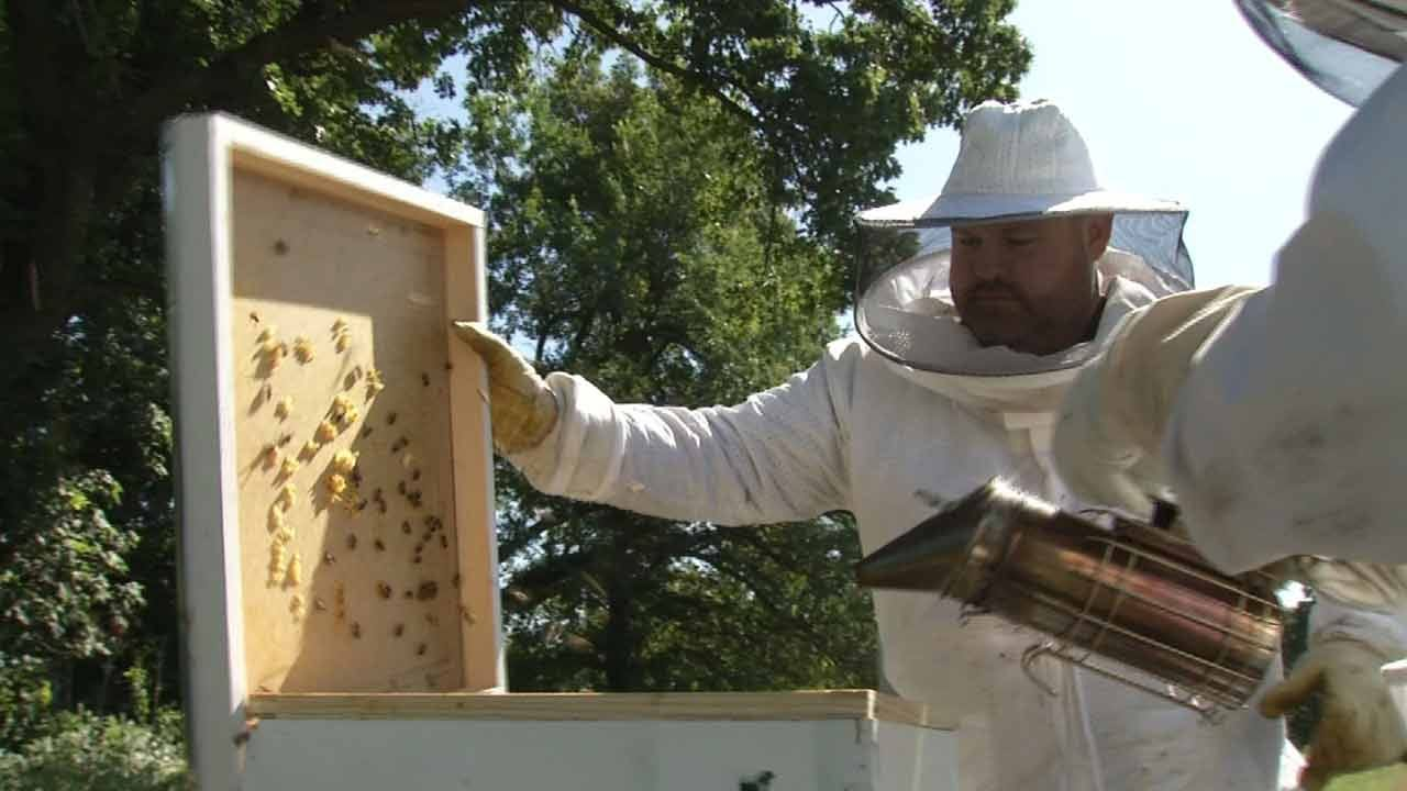 Tulsa Mission Using Bees In New Work Therapy Program
