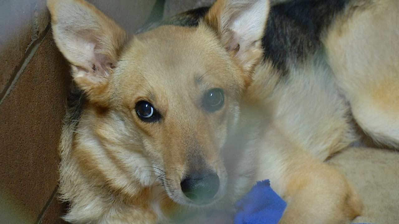 Dogs Rescued In Bixby Now Available For Adoption