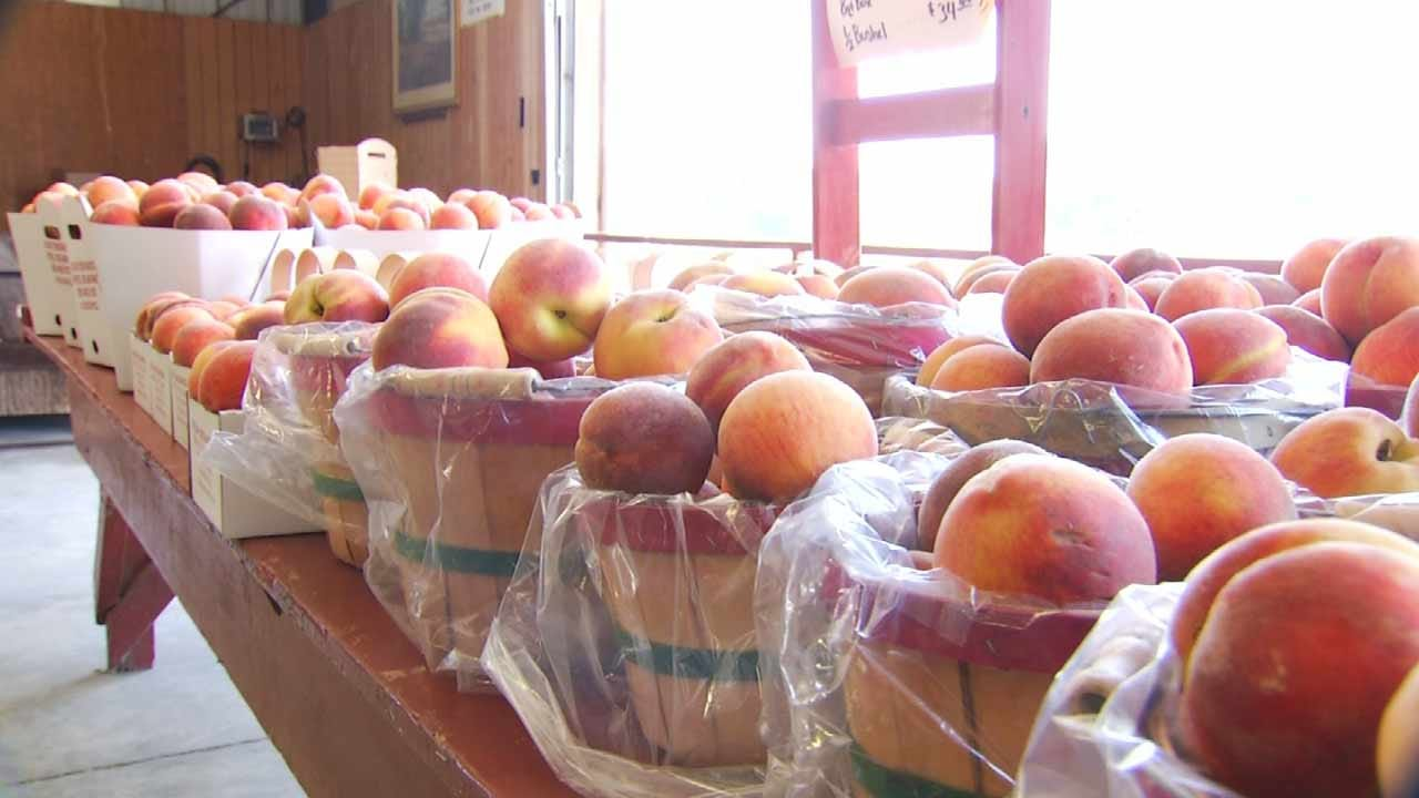 Peach Farmers Reminded Of Labor Laws Before Oklahoma Festivals