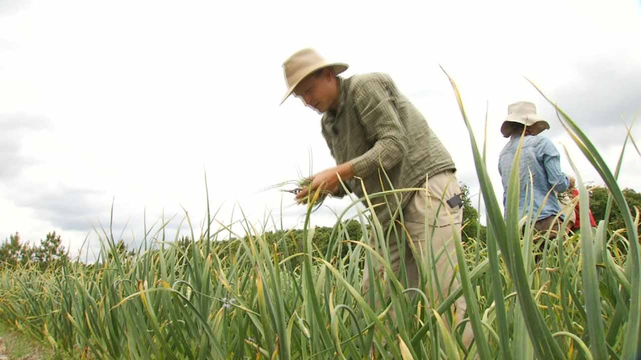Farmers Doing What They Can To Increase Interest In Local Foods Movement
