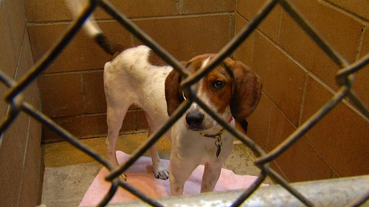 Humane Society Of Tulsa Holding Two Day Adoption Event