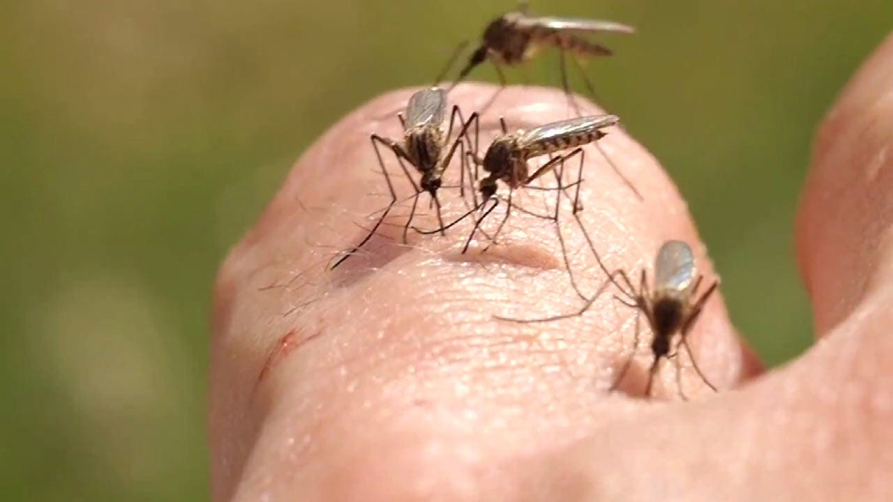 Concerns On The Rise After West Nile-Infected Mosquitoes Found In Tulsa County