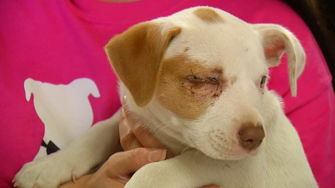 Rescuers Find Puppy Thrown From Car In Glenpool