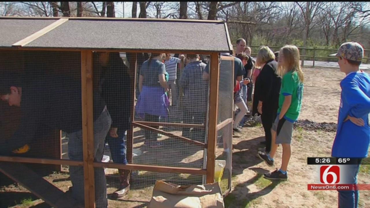Tulsa Middle School Students Build Coop, Raise Laying Hens