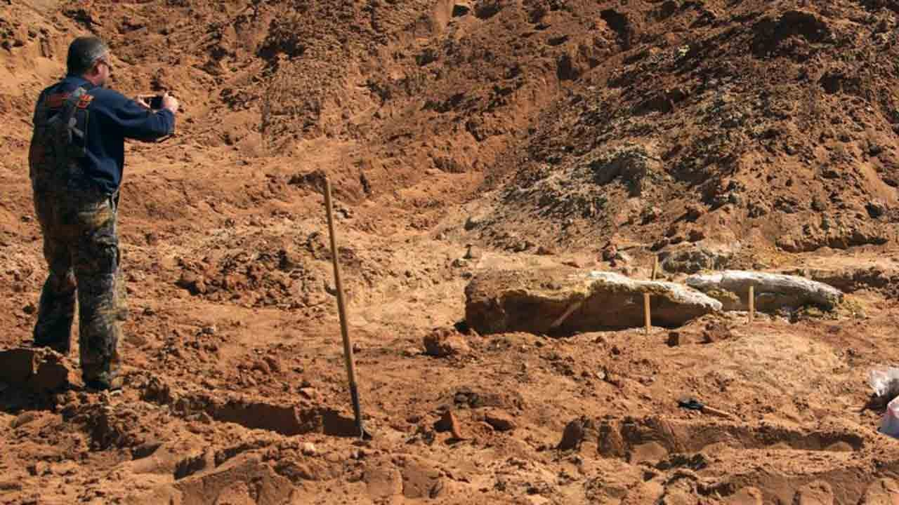 Mammoth Skull Unearthed Near Alva
