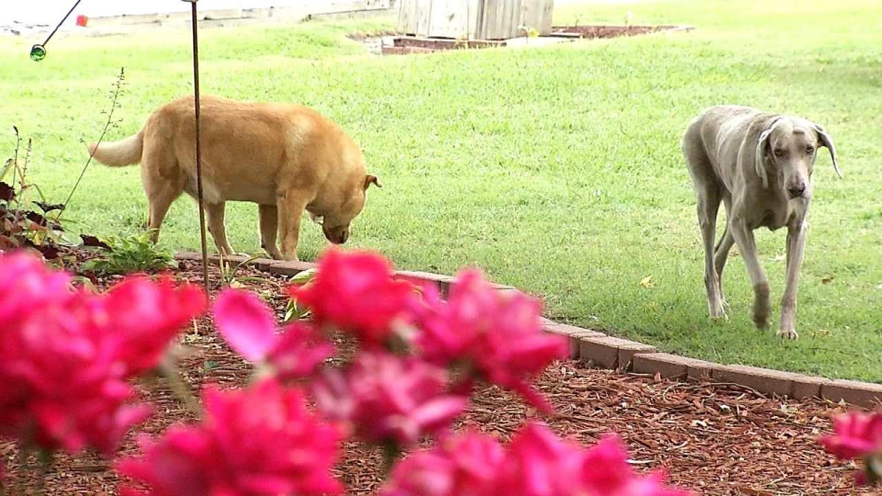 Tick Season Already Affecting Local Pets