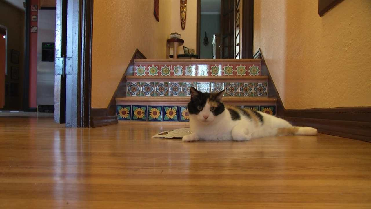 Woman Hopes To Open Cat Cafe In Tulsa