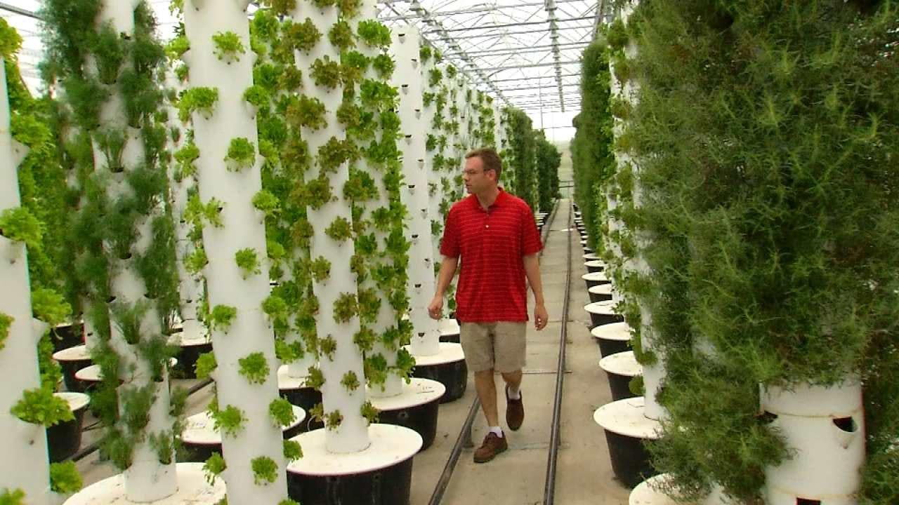 Tulsa Entrepreneurs Feed Need For Local, Fresh Green Veggies