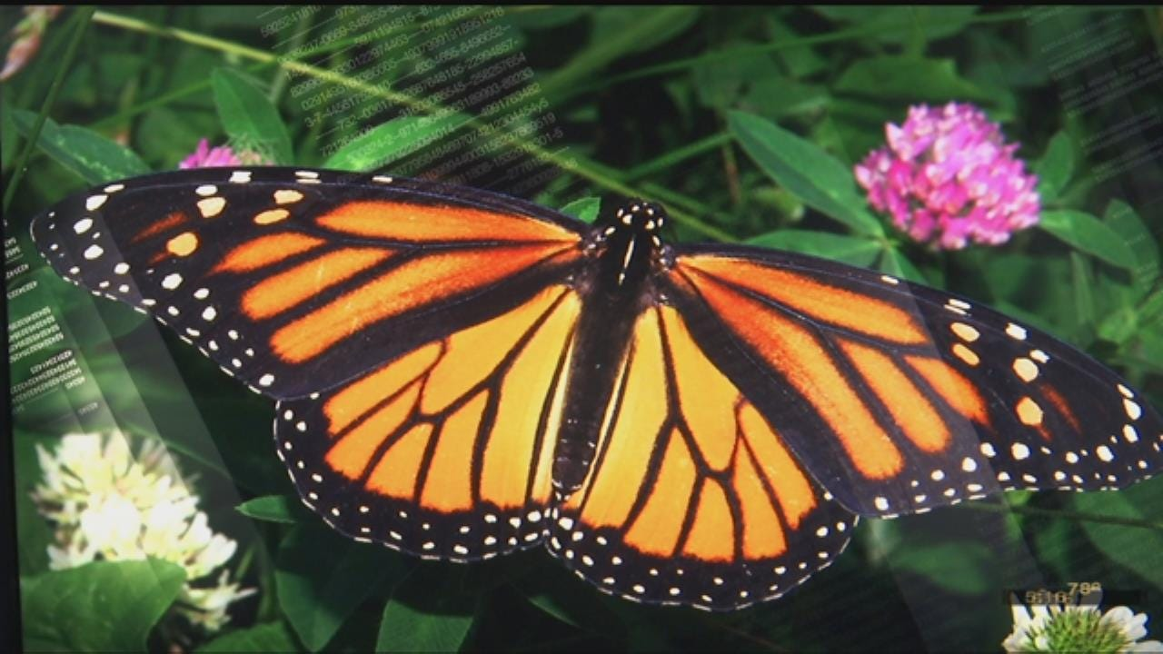 City of Tulsa's First Monarch Waystation To Be Installed Friday